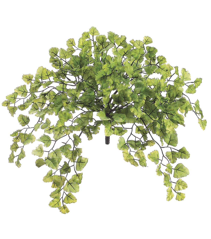 bloom-room-15-maidenhair-fern-bush-green ---- --------bloom-room-15-maidenhair-fern-bush-green by bloom-room